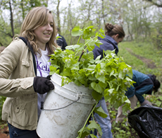 Part-Time student Pamela Wyatt works to rid Jackson Park of invasive plant growth.